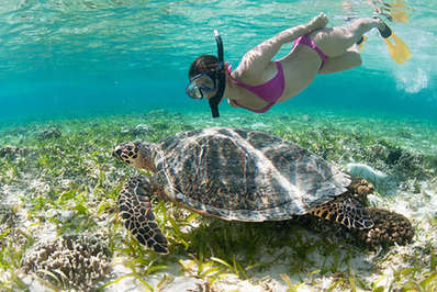 Swimming-with-Sea-Turtle-Gili-Meno