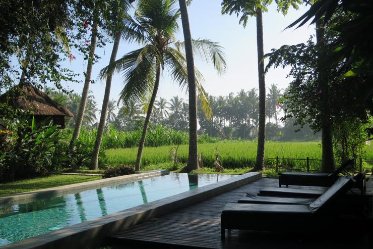 beautiful pool next to the rice fields