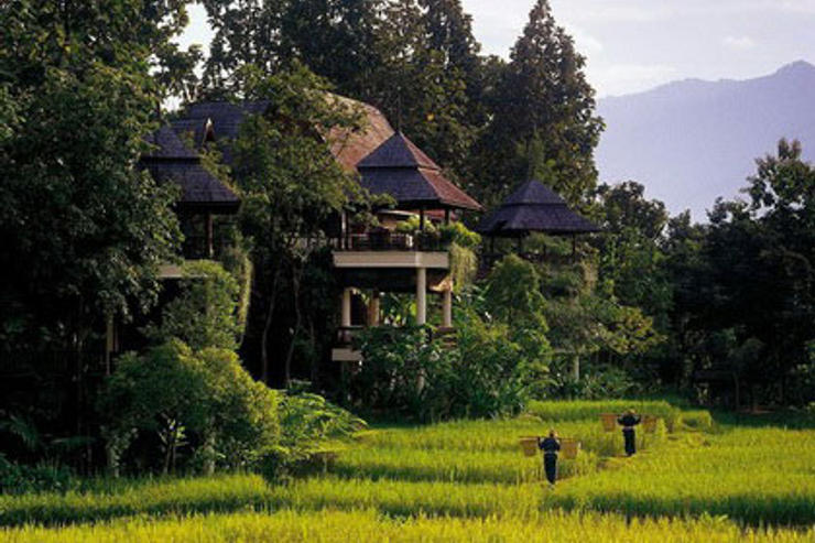 Rice fields in the Resort